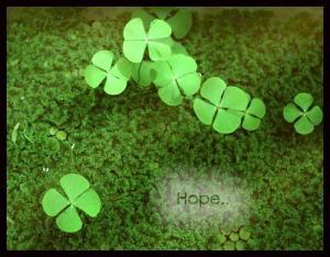 Cỏ 4 lá - một biểu tượng của sự may mắn (ảnh: Internet)